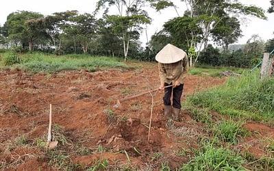 ラオスアボカド栽培レポート